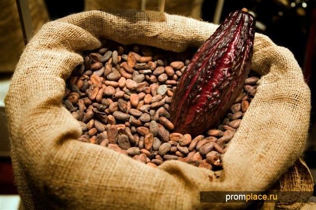 Какао-бобы, сорт криолло