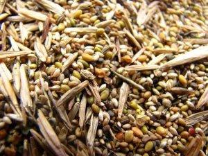 Травы, зерновые и другие оптом