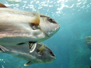 База для передржки свежей рыбы