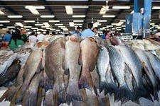 Продаем свежую рыбу