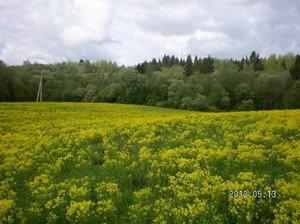 Продам усадебный участок у леса 50 сот.(0.5 Га)
