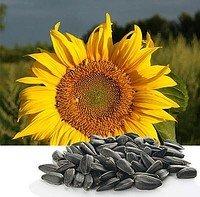 Продаем семена подсолнечника для посева