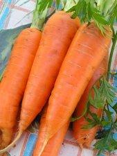 Предлагаем оптом морковь