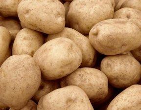 Продаем оптовми партиями картофель