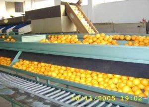 Привозим из Греции апельсины и мандарины