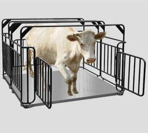 Весы для животных Ахтуба