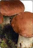 Покупаем сушеные грибы