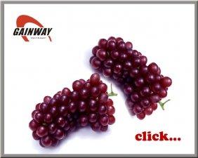 Предлагаем экстракт виноградной кожи