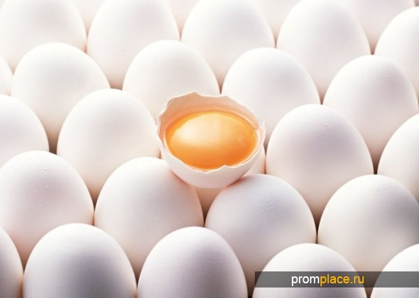 яйцо куринное