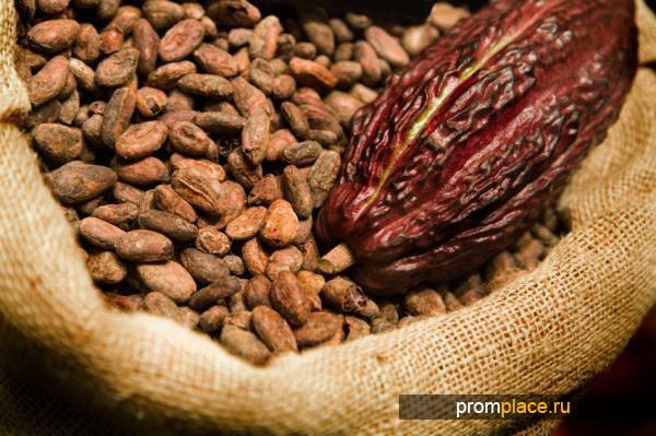 Какао- бобы, сорт форастеро