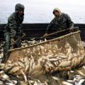Продаем морепродукты