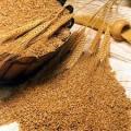 Покупаем пшеницу и ячмень