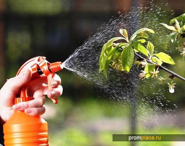 Обработка плодовых деревьев купоросом
