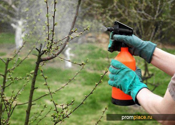 Опрыскивание растений медным купоросом