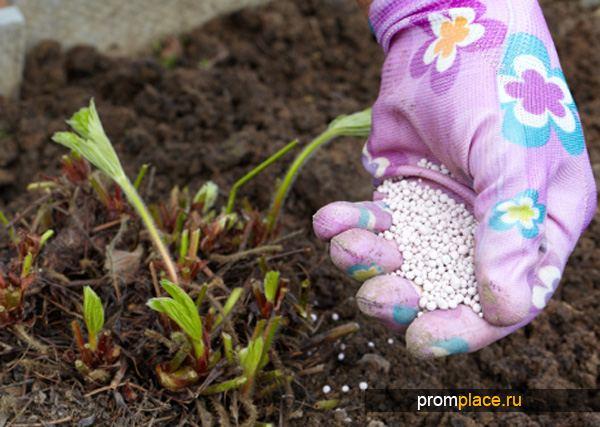 Внесение порошка кислоты борной в почву