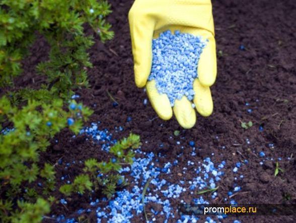 Подкормка почвы осенью