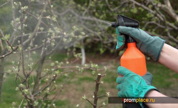 Обработка деревьев купоросом