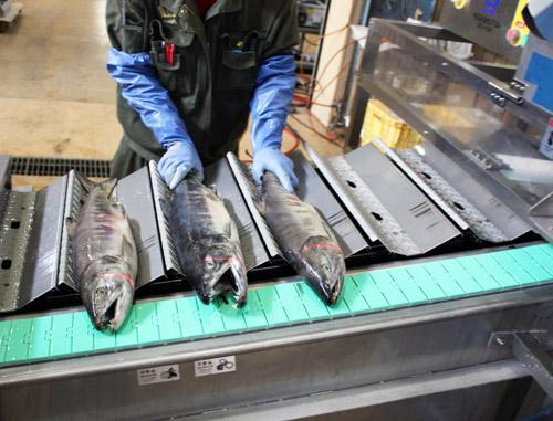 На Камчатке не хватает строителей и обработчиков рыбы