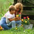 Преимущества использования фосфорно-калийных удобрений