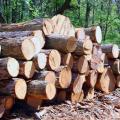 Организация деревообработки