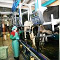 Производство молока, молочной продукции