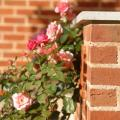 Фасадные работы: виды и собенности кладки облицовочного кирпича