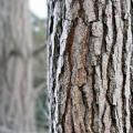Защитные пропитки для дерева